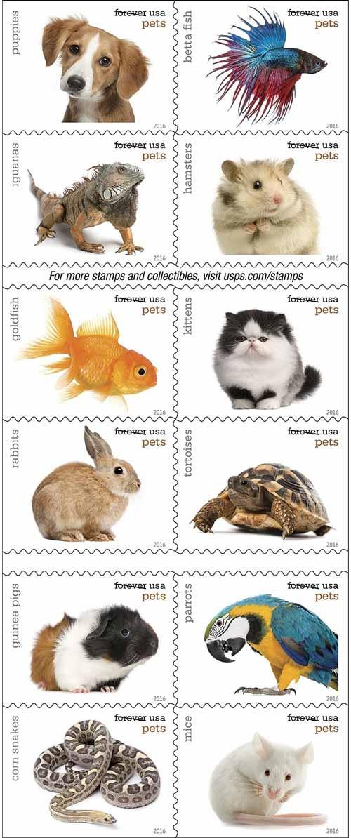 Selos-com-animais-de-estimação-ainda-são-produzidos-e-podem-ser-úteis_fellipevasconcellos_2