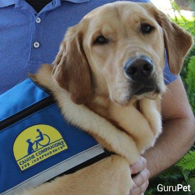 6-cães-que-vieram-ao-mundo-para-mudar-vidas_Knoxville_fellipevasconcellos