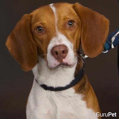 6-cães-que-vieram-ao-mundo-para-mudar-vidas_Roscoe_fellipevasconcellos