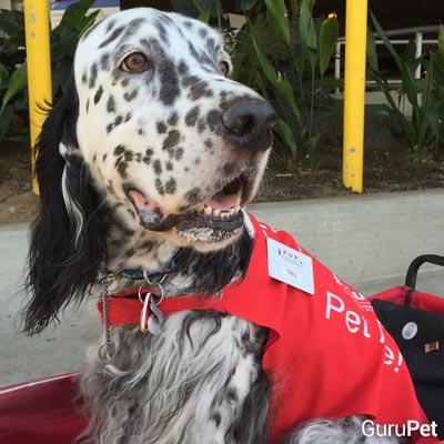 6-cães-que-vieram-ao-mundo-para-mudar-vidas_Tru_fellipevasconcellos