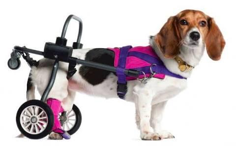 cachorro-cadeira-de-rodas_fellipevasconcellos