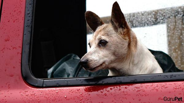 Cachorro-no-carro1_fellipevasconcellos