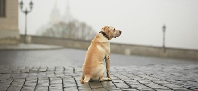 Cachorro sozinho - matéria sobre cachorro ou gato perdido_fellipevasconcellos