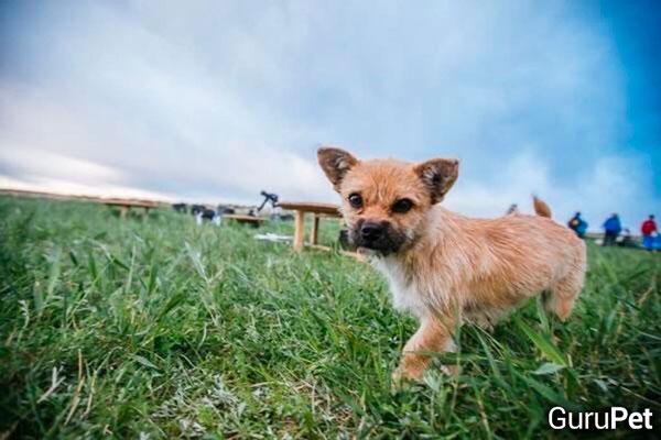 Cão-de-rua-corre-atrás-de-maratonista_fellipevasconcellos_2