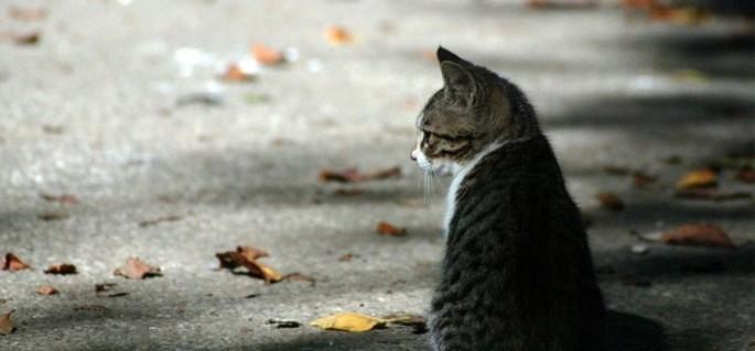 Gato perdido - matéria sobre cachorro ou gato perdido_fellipevasconcellos
